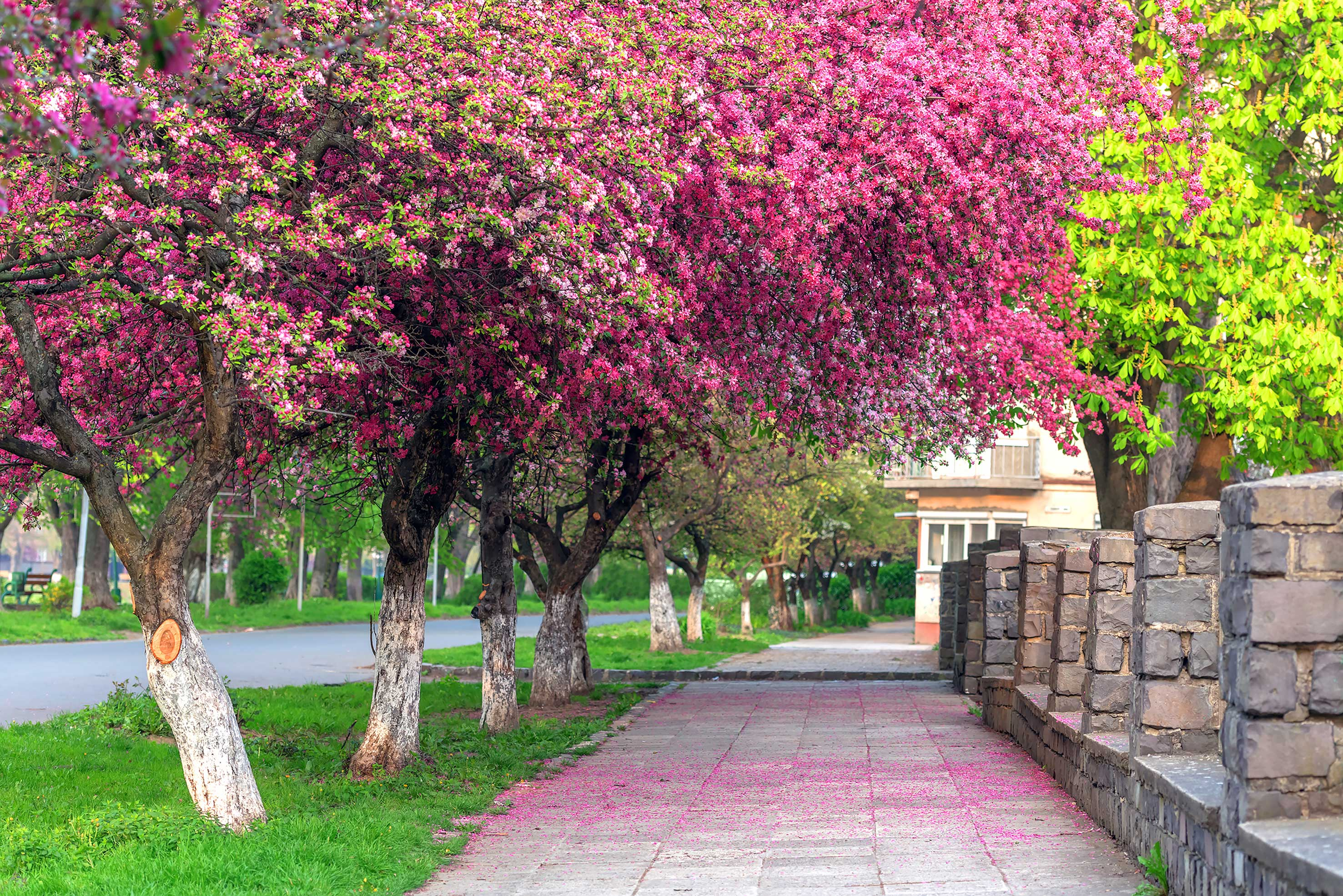 دانلود عکس فصل بهار با کیفیت بالا